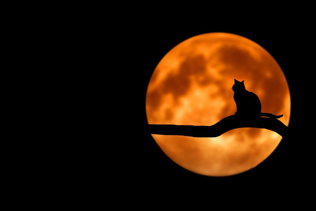 Cat silhouetted against a full moon at night